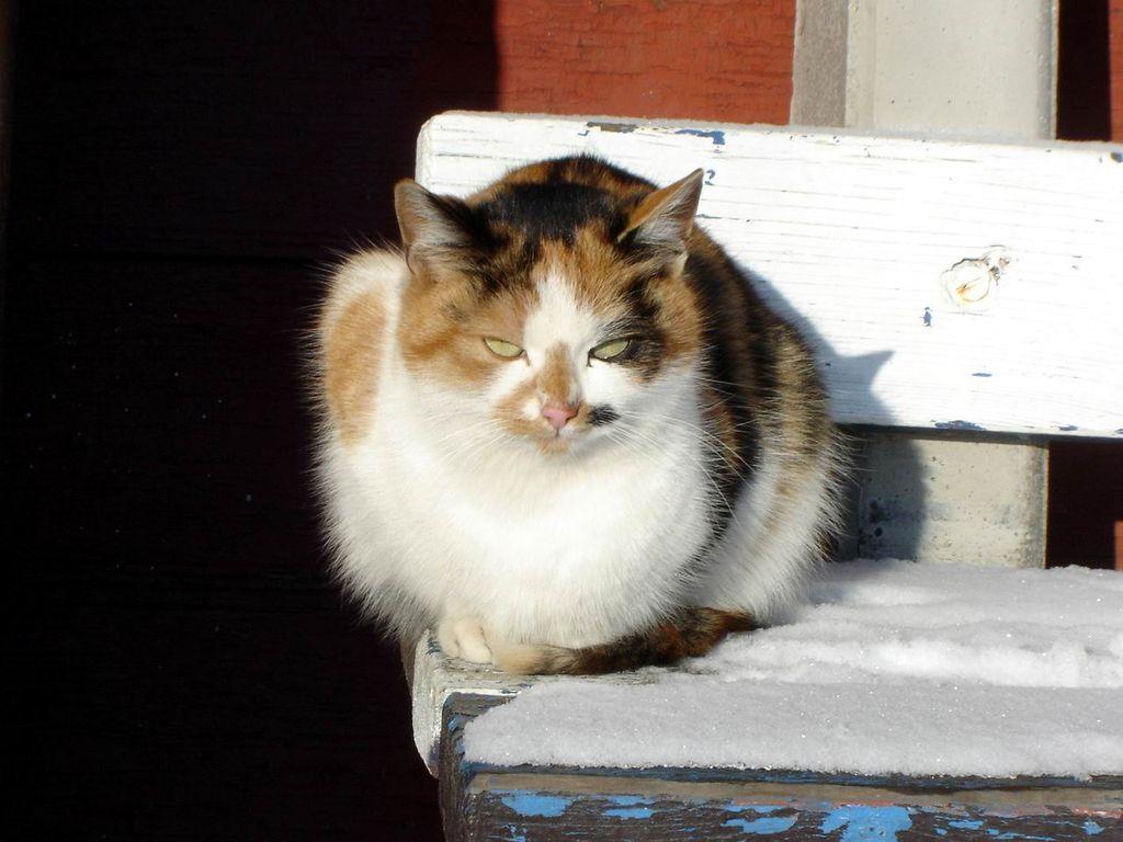 tvoje kočička tak těsná