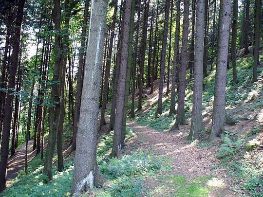 31.7.2008 - Rajnochovická lž: na tomto snímku jsou vidět hned tři části původní trasy, ta třetí je vpravo nahoře © Mixmouses