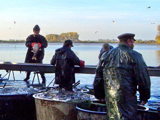 18.10.2008 - Tovačov: ryba sem, ryba tam, všude kam se podívám © Veronika Kluková