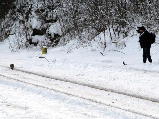 17.01.2009 - Ostružná: kočka staniční pózuje Radkovi © PhDr. Zbyněk Zlinský