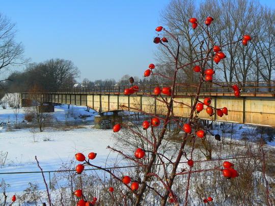 Šípkové zátiší s mostem přes Labe © Karel Furiš